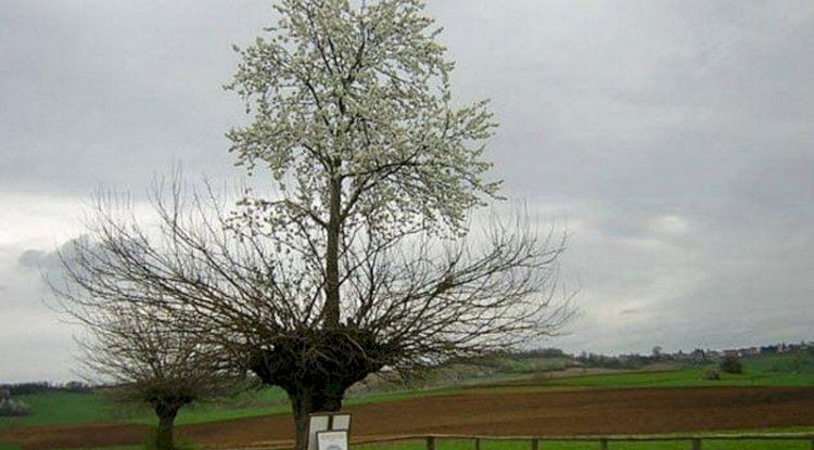 Ağaç Üstünde Ağaç | Doğada Bulunan 7 Tuhaf Şey