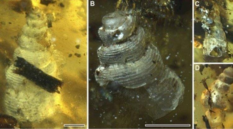 Deniz Yaşamı Kehribarlanmış | Doğada Bulunan 7 Tuhaf Şey