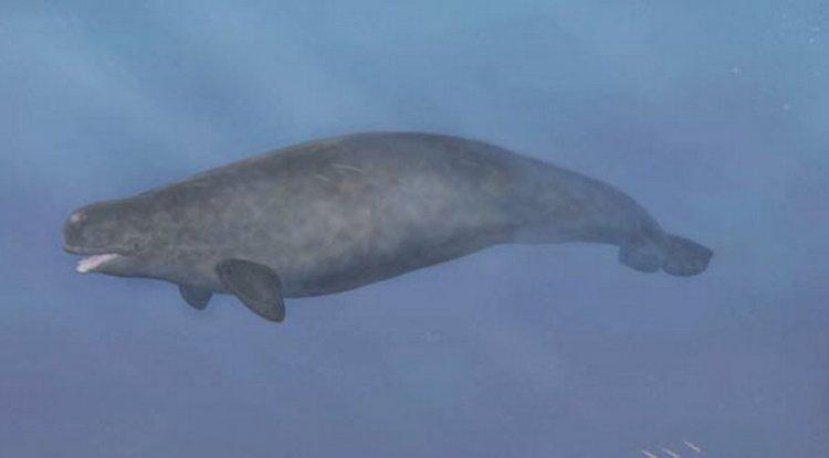 Beluga-Narwhal Hibrit | Doğada Bulunan 7 Tuhaf Şey