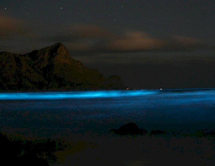 Çine Binlerce Turist Çeken Olay: Zehirli 'Mavi Gözyaşı'